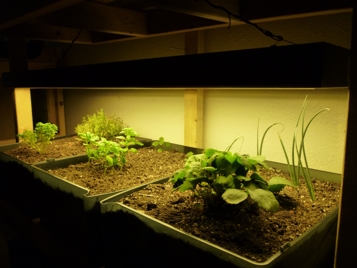 What is Indoor Gardening? Here we have a small indoor soil garden, powered by a 218w High Output T5 Lighting Unit.