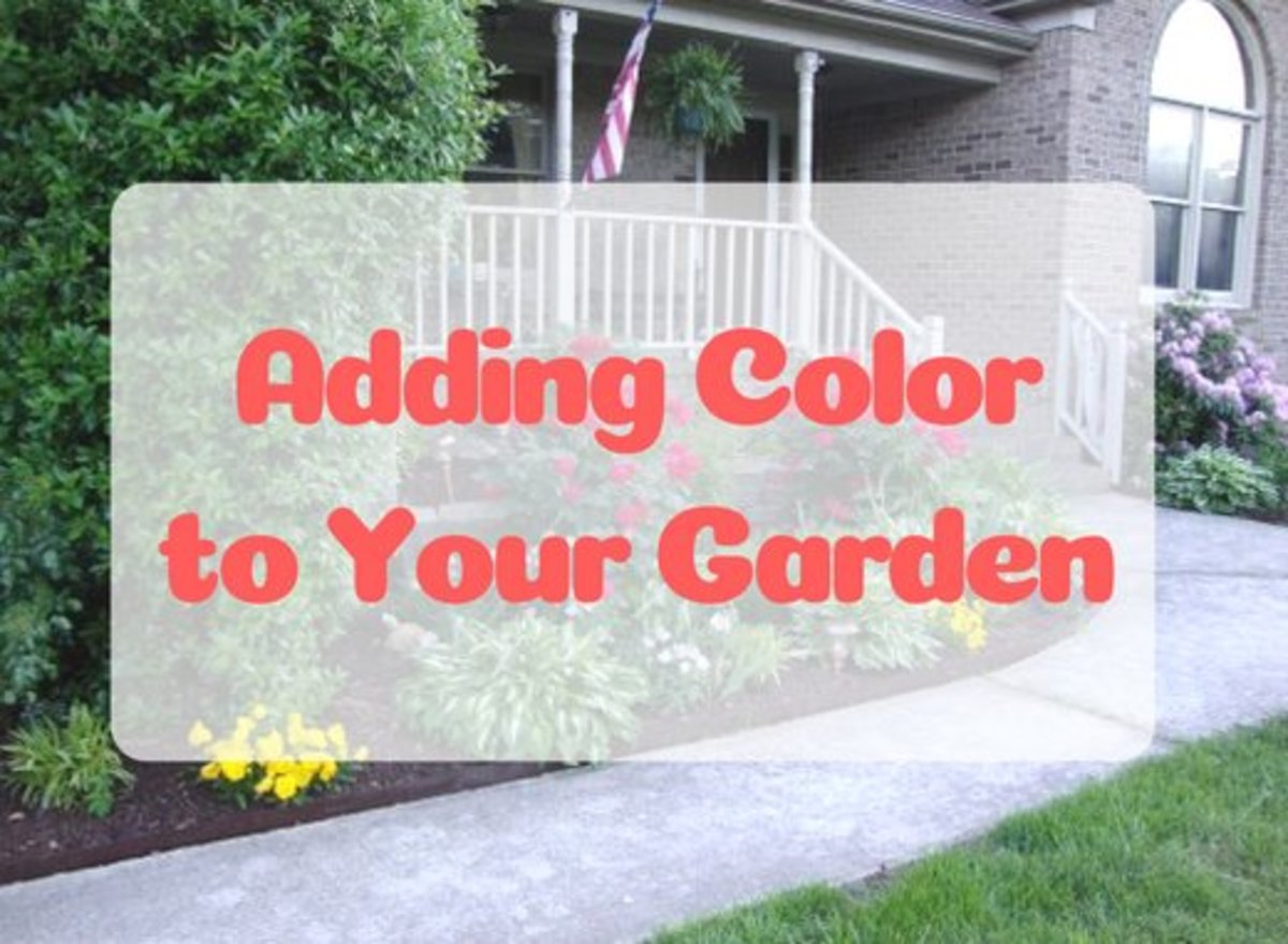 How to Effectively Use Colorful Plants and Flowers in Your Yard