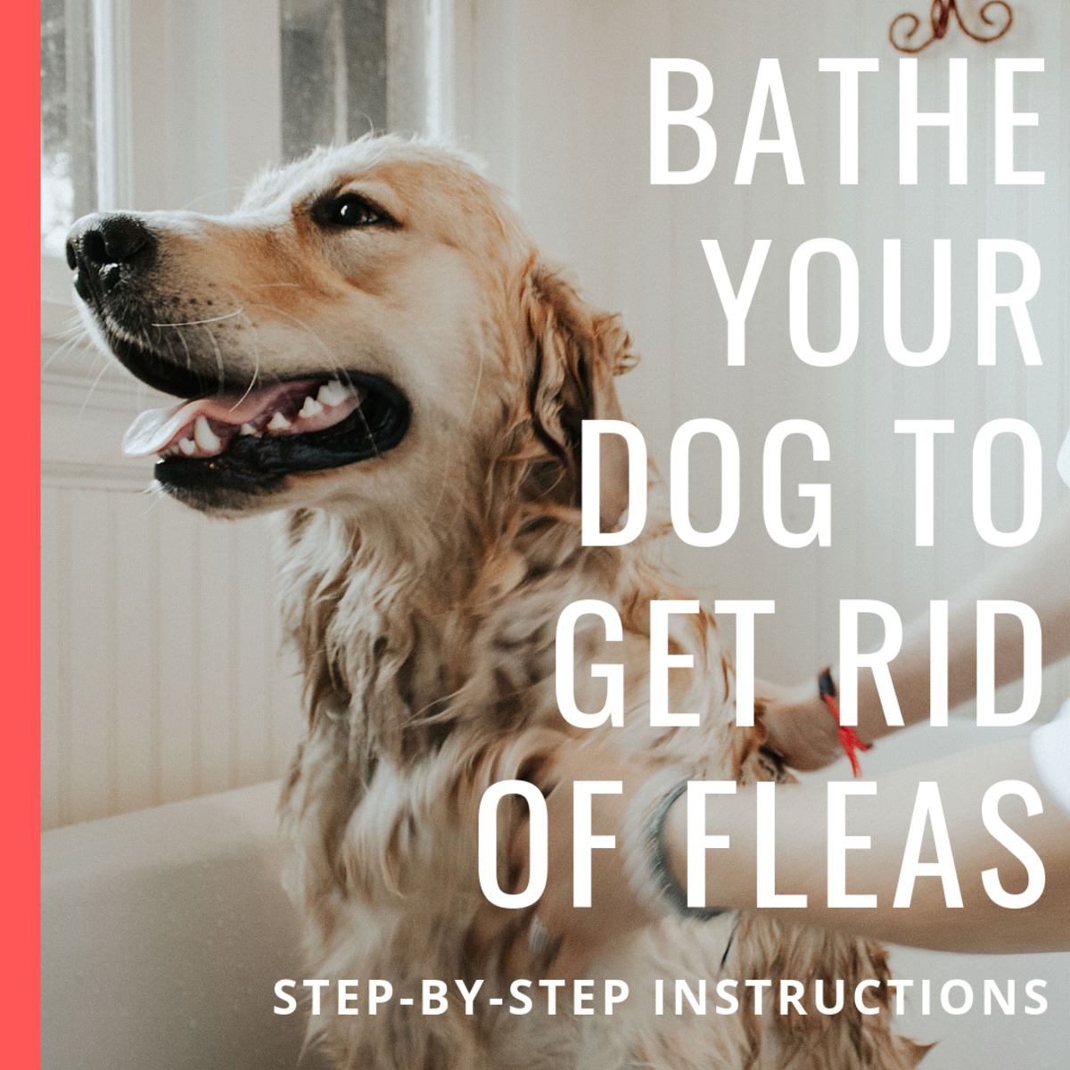 How to Get Rid of Dog Fleas Using a Bath and Soap