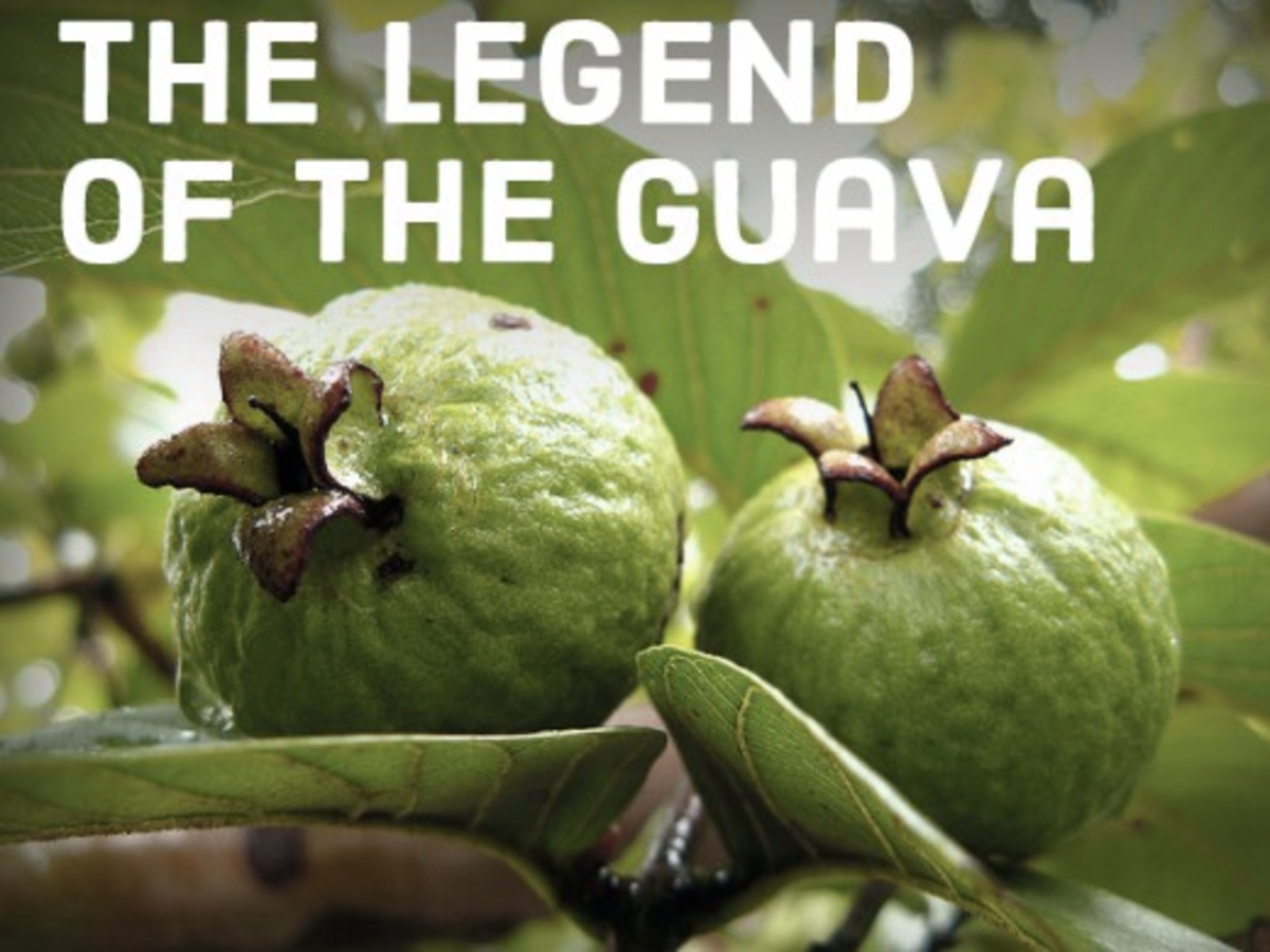 Learn the story behind how the guava got its crown.