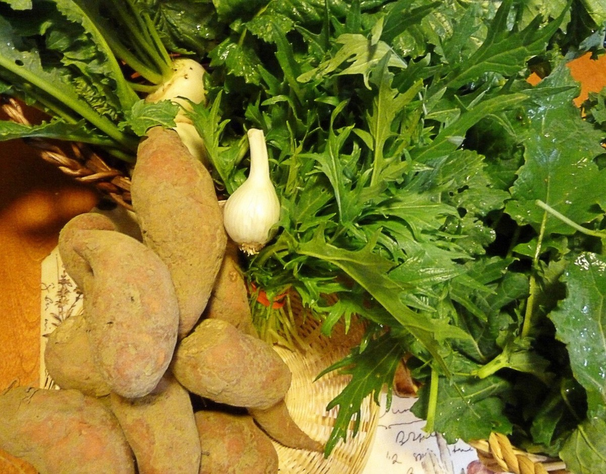 Farm share vegetables, including the spiky-leaved mizuna in the center of the photo