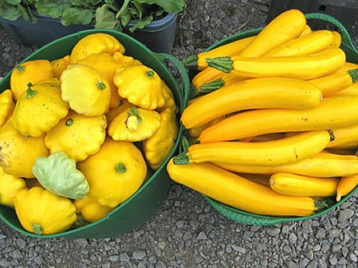 A fresh harvest of vibrant and hearty squash.