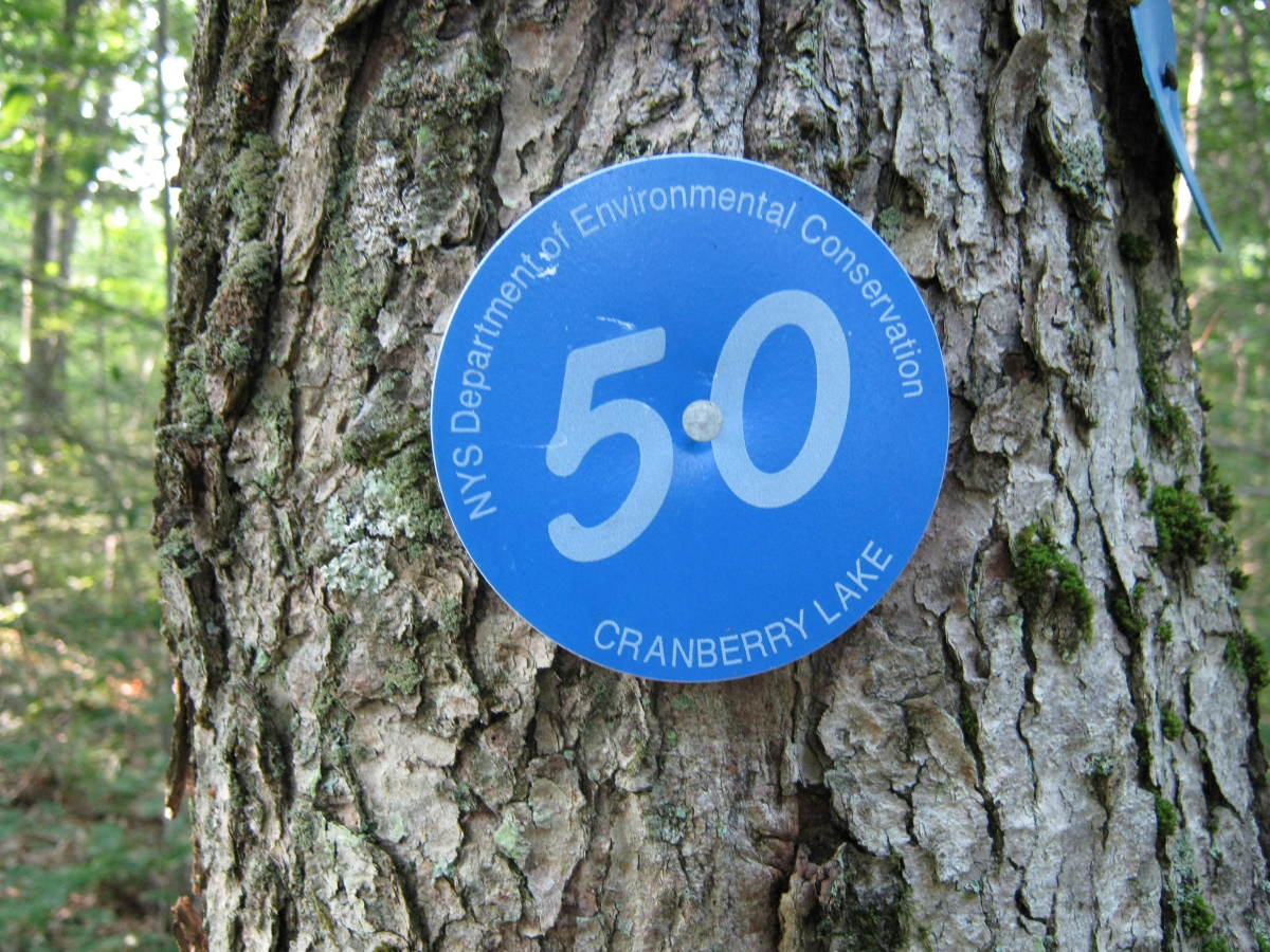"Blue ""CL50"" disks are posted along the length of the trail."