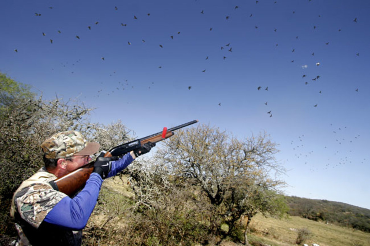 Dove Hunting In Texas With Shotguns