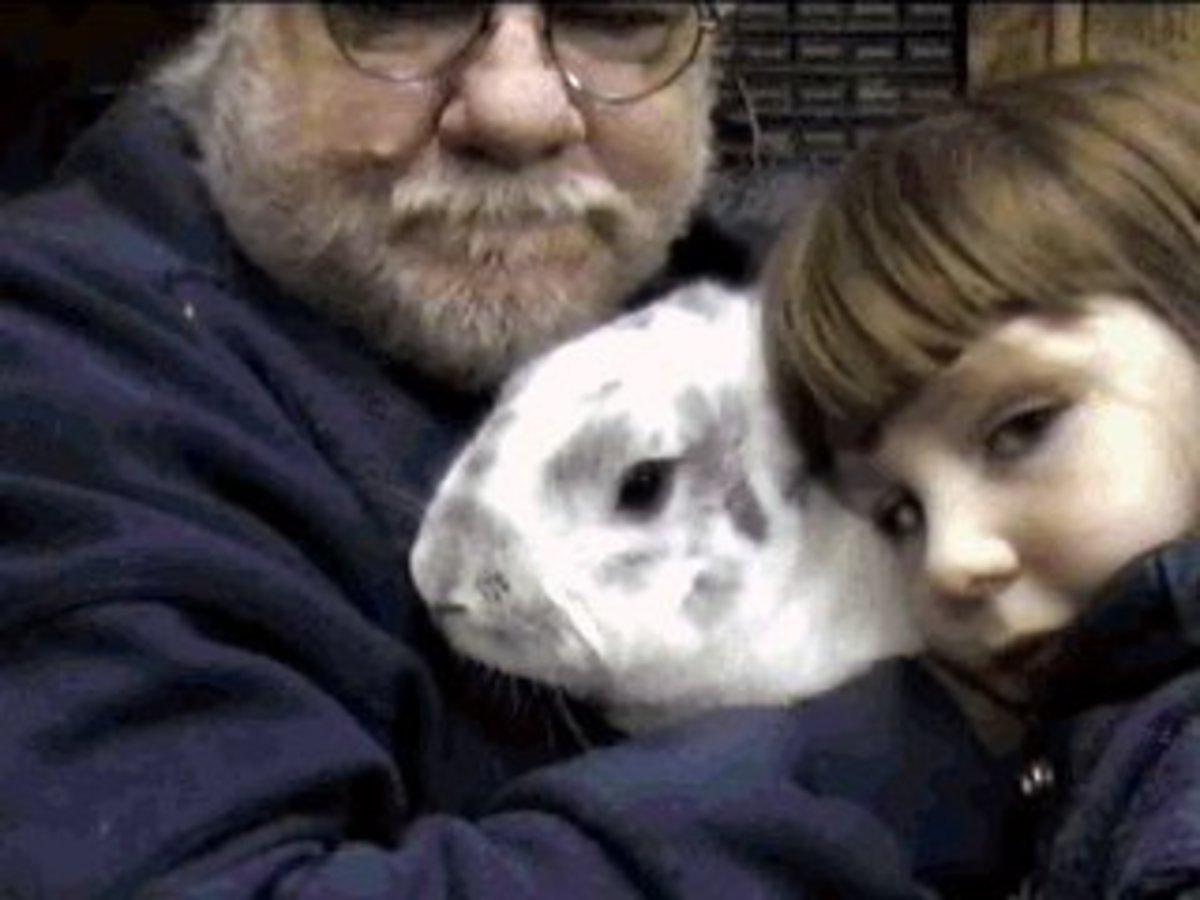 The Story of Buggy Bunny, Our Beloved Pet Rabbit