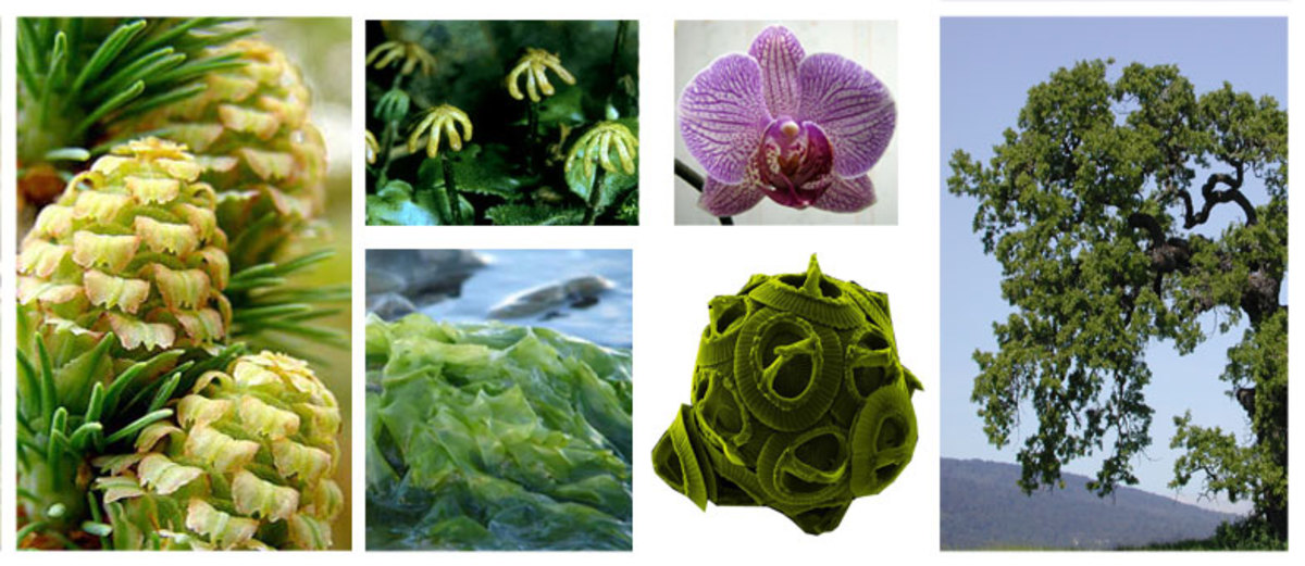 Types of plants with pictures owlcation for Different kinds of plants