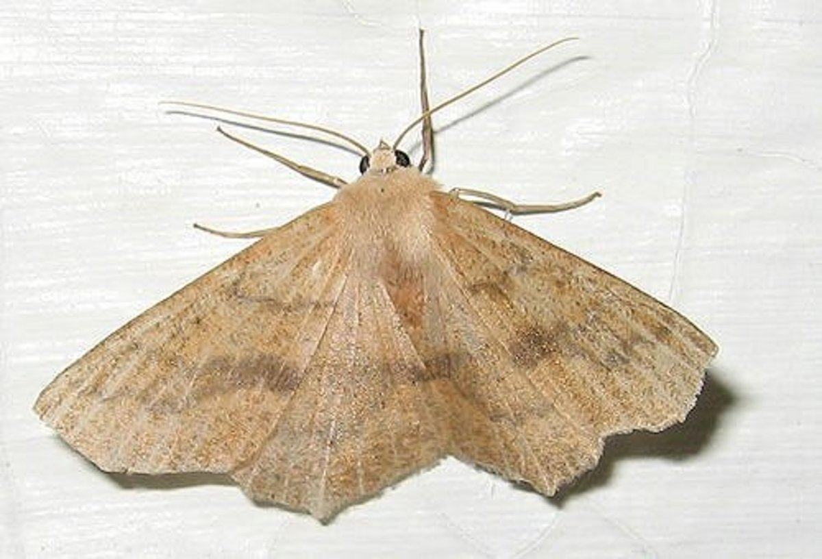 How to Get Rid of Pantry Moths in Your Kitchen Cupboards ...