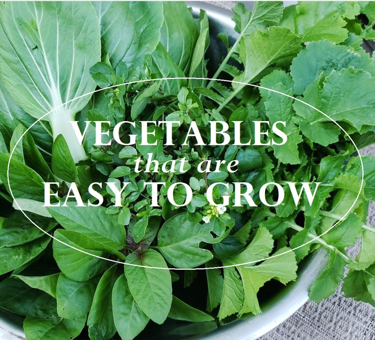 Have fun and enjoy some delicious homegrown food by starting these easy-to-grow veggies in your garden today.