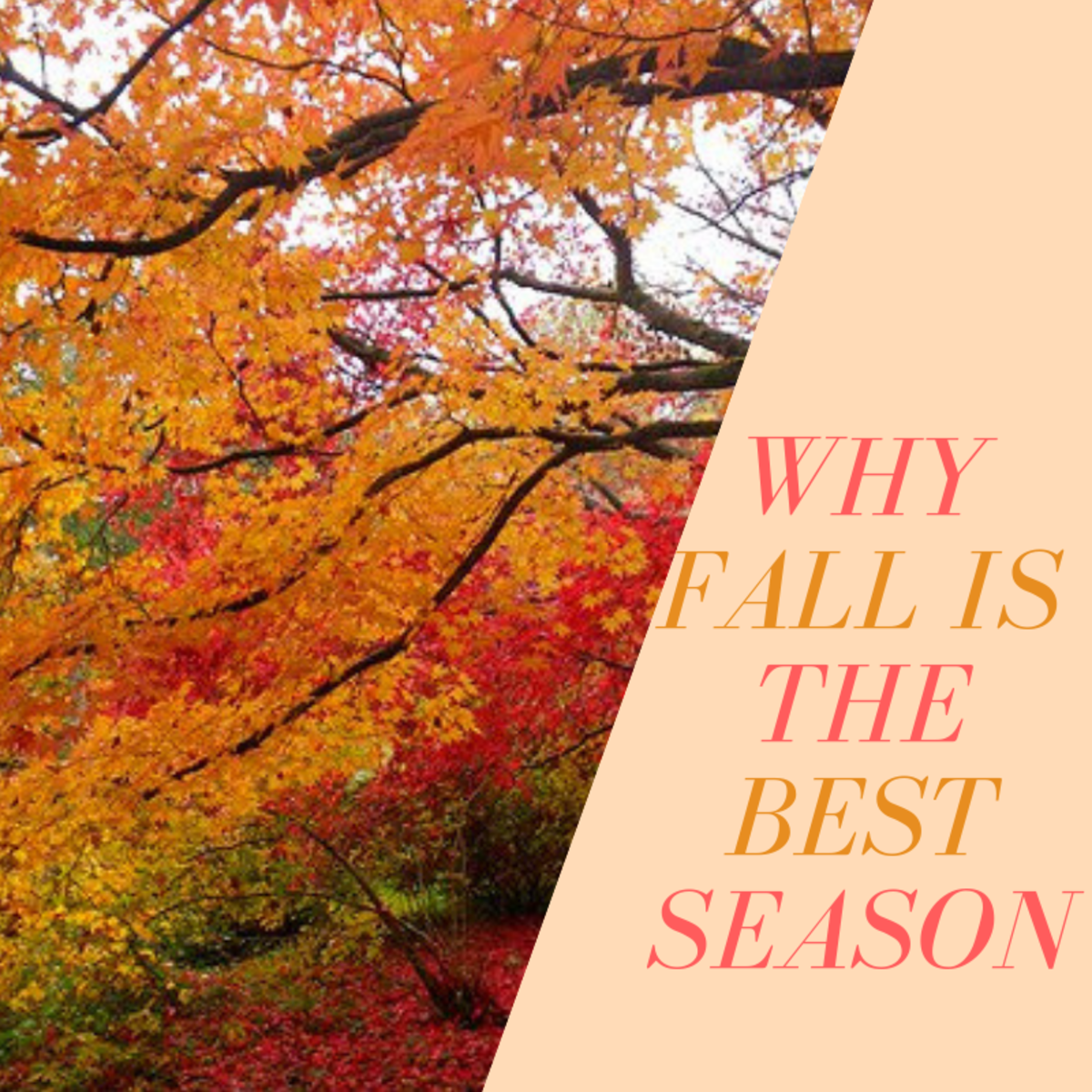 Autumn compositions for every taste