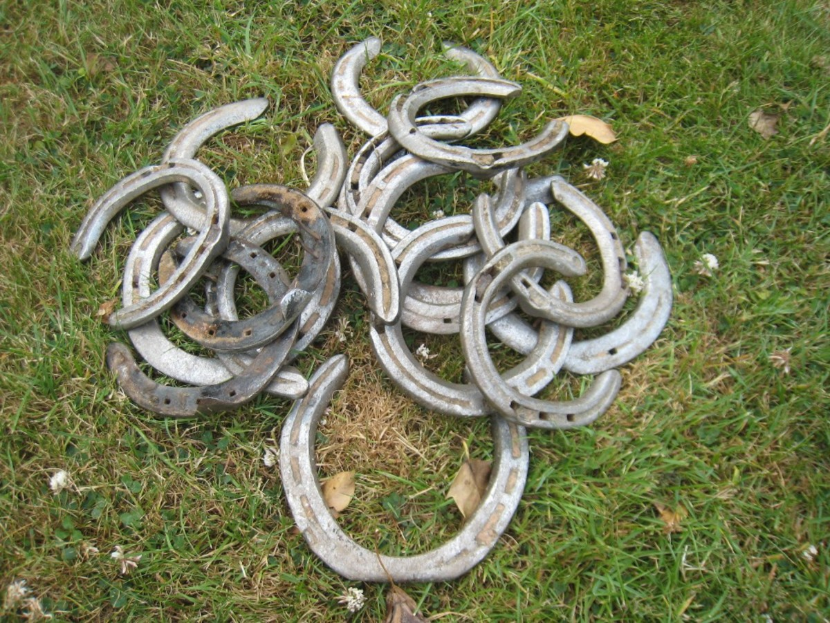 Ready to paint: A batch of used horse shoes after they've been pulled off the horse