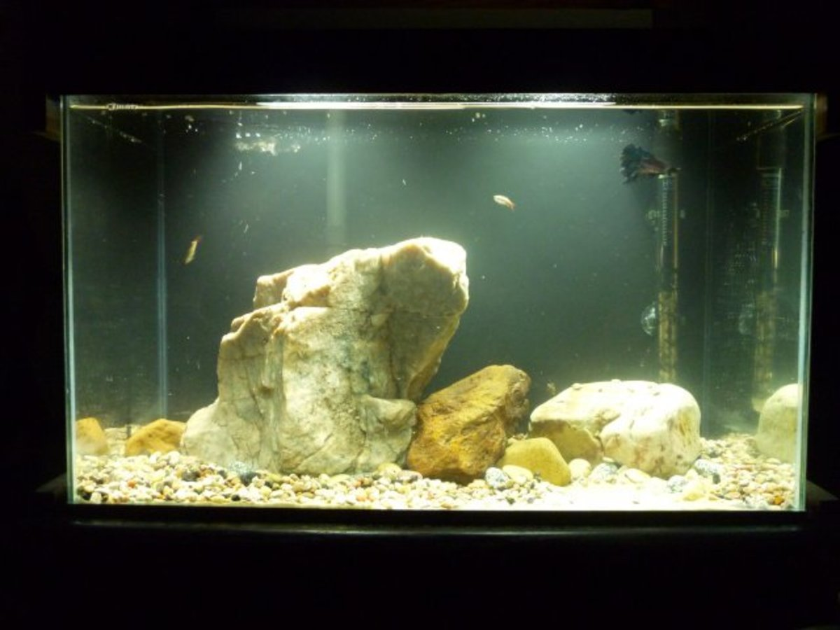 Rocks in Aquariums. The large rock featured in this 10 gallon weighed more than the other rocks and the sand together.