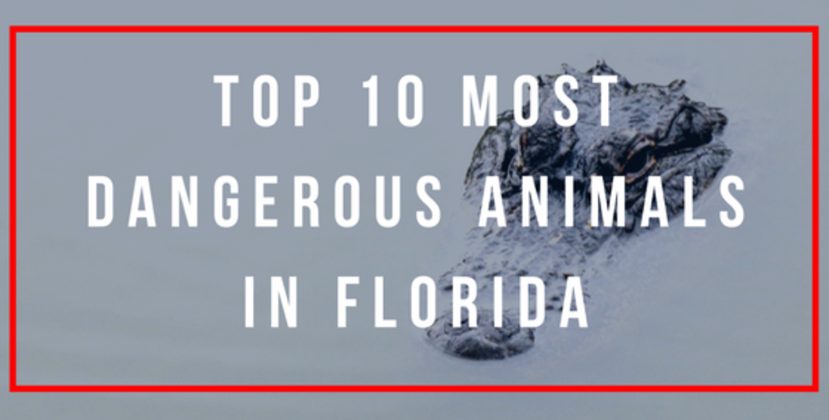 Image of: Fight There Are Numerous Animals Wanderwisdom The Top 10 Most Dangerous Animals In Florida Wanderwisdom