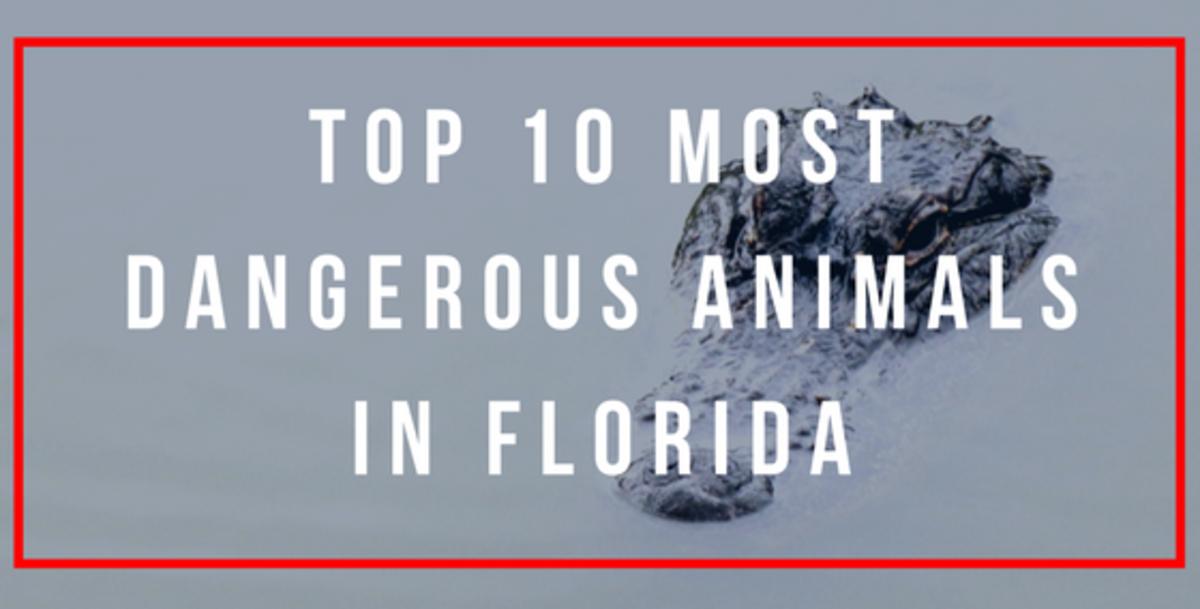 most-dangerous-animals-in-florida-top-10