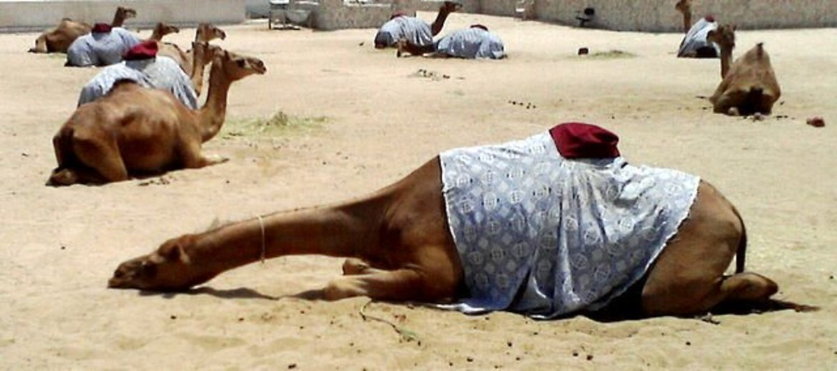 It's a camel's life. Just sticking my neck out...