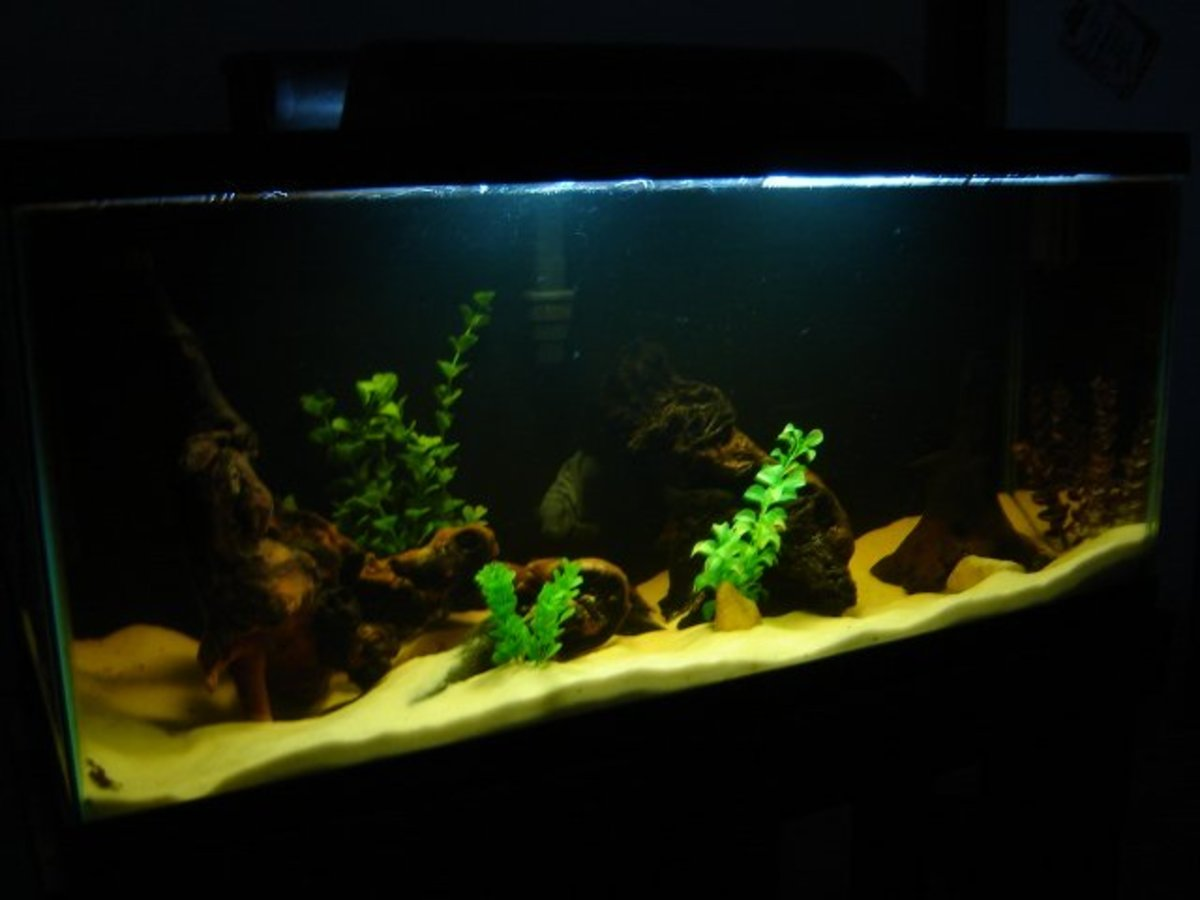 How to Incorporate Driftwood Into Your Natural Aquarium or Fish Tank