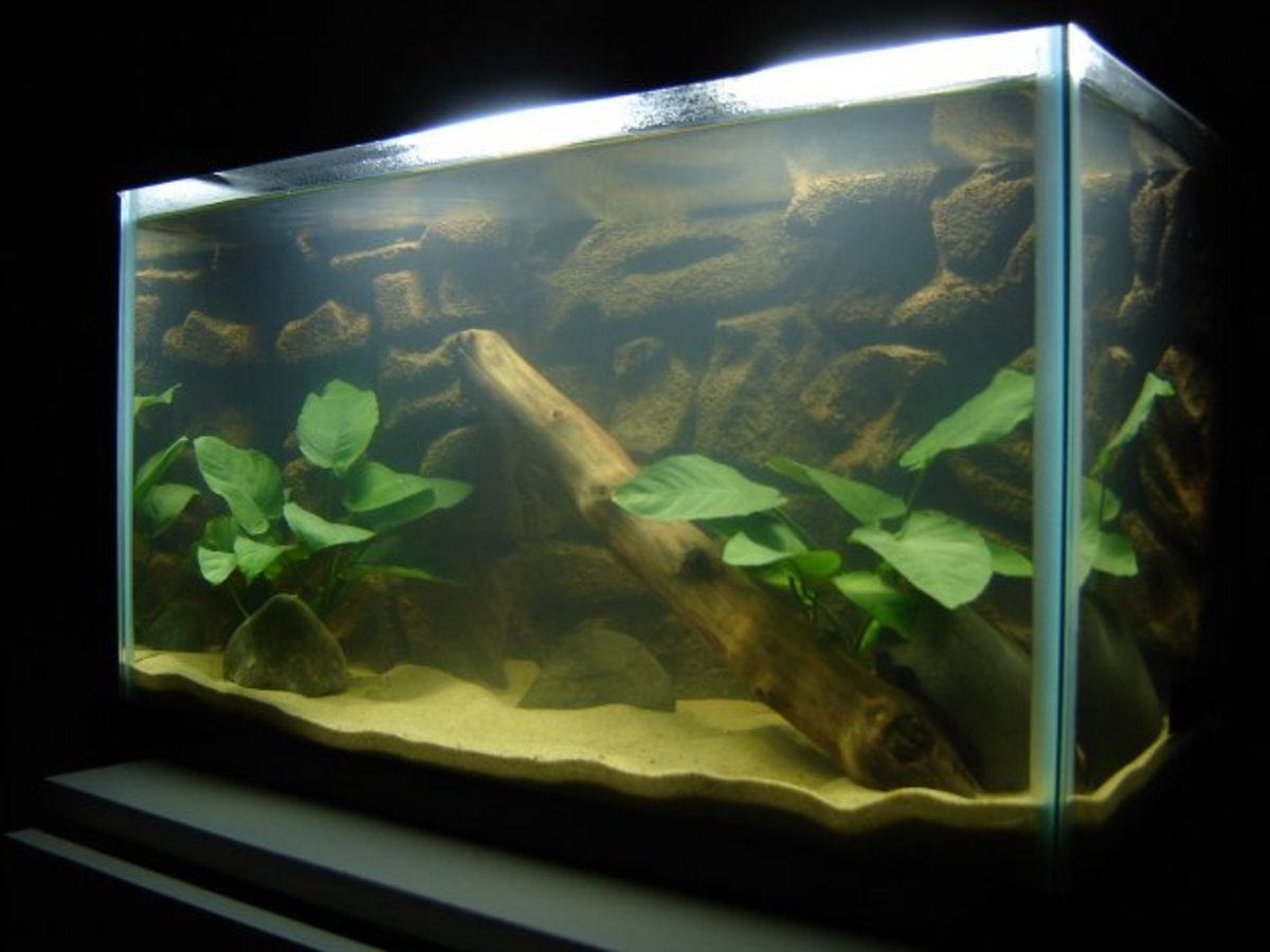 Sand in Aquariums. Sand gives a natural touch to any aquarium.
