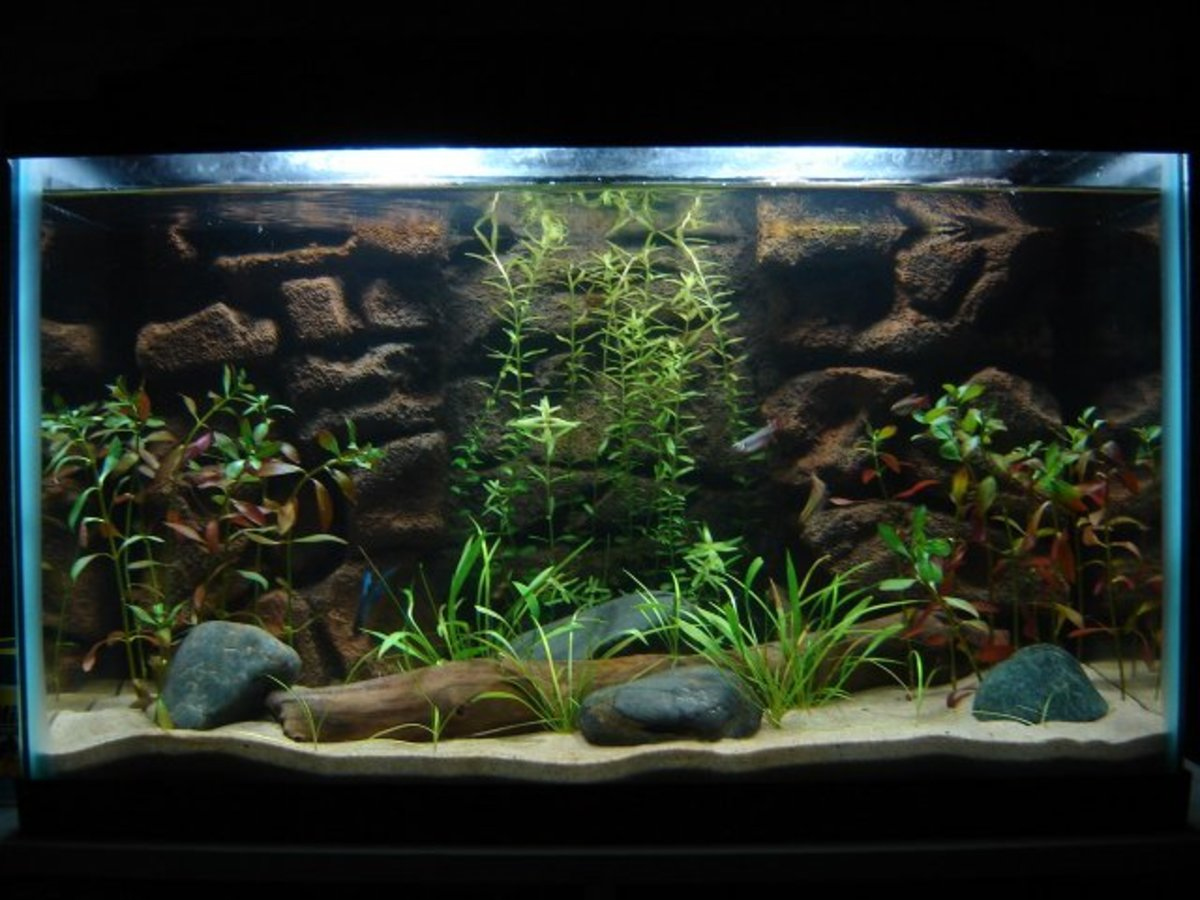 Live plants can be used in any size fish tank. This is a 10-gallon tank.