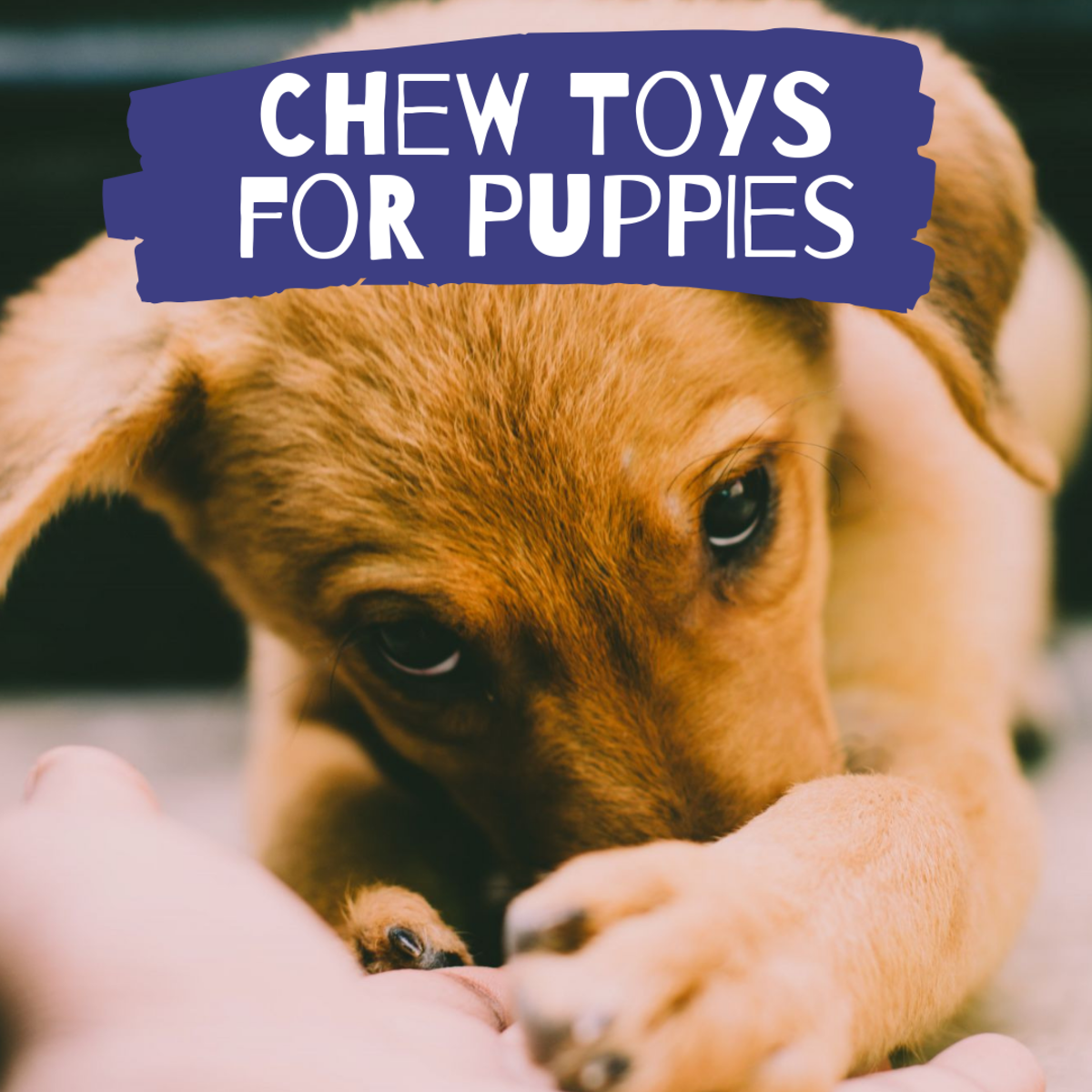 The Best Chew Toys for a Teething Puppy