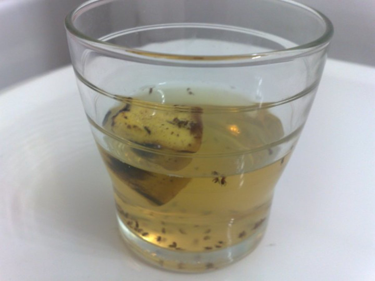 A Simple, Cheap, and Effective Way to Kill Fruit Flies