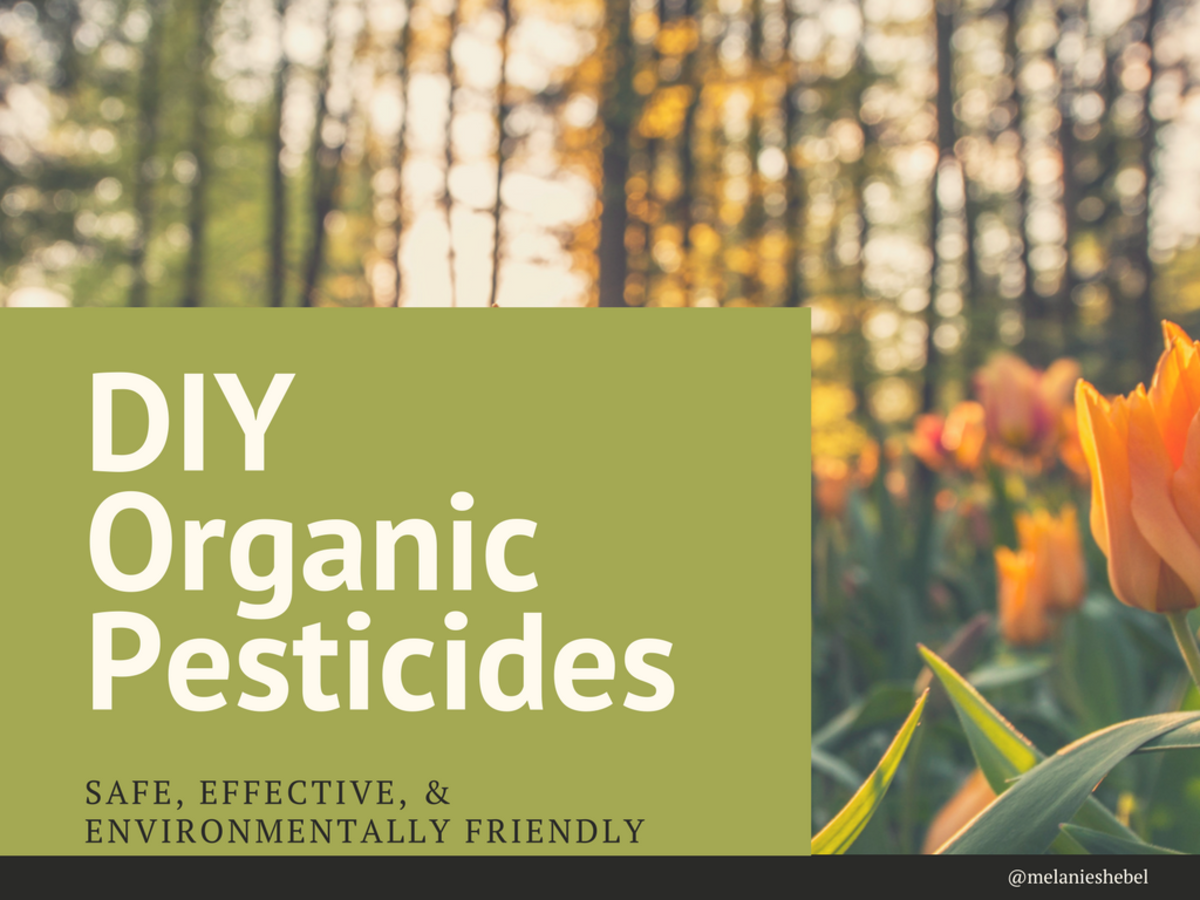 This article will show you how to make a handful of different all-natural DIY pesticides for use in your garden.