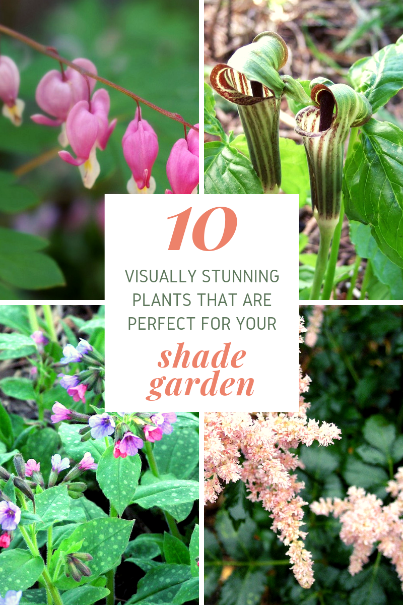 These shade-loving plants are perfect for gardens that don't get much sun.