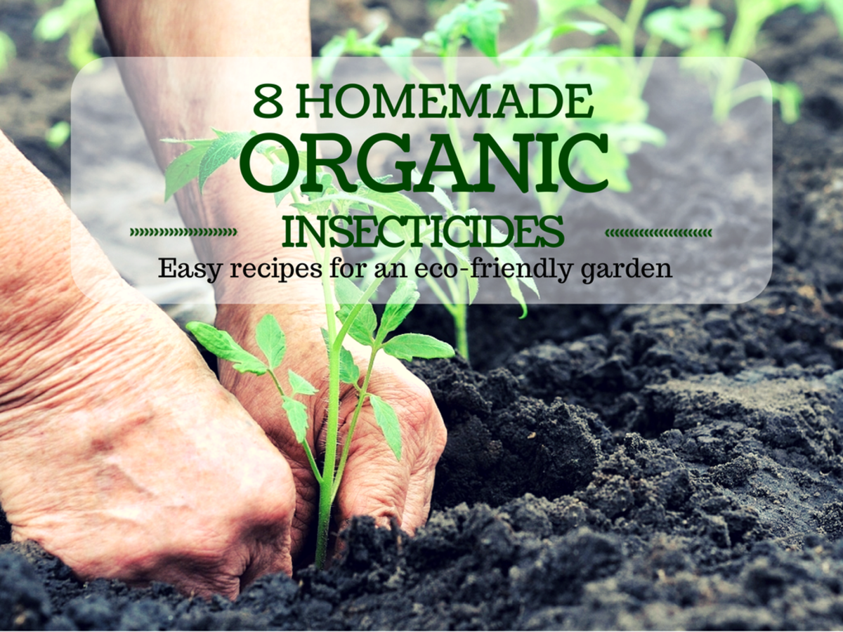 8 Recipes for Homemade Organic Insecticides
