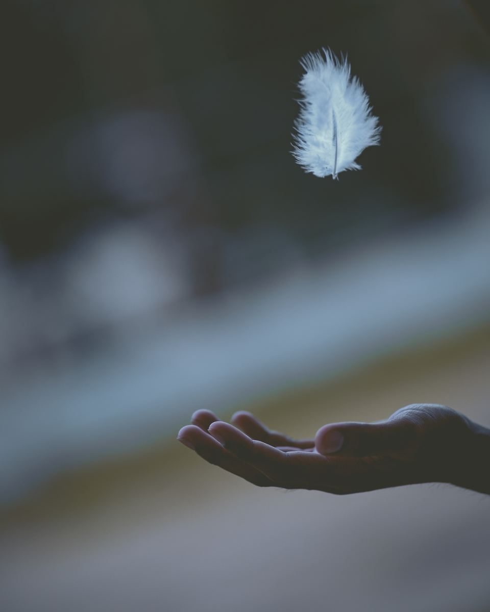 The element of air represented by a feather. Photo by Javardh on Unsplash