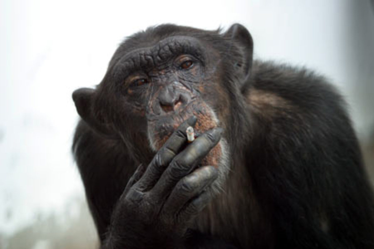 5 Stupid Arguments Against Evolution That Just Won't Die