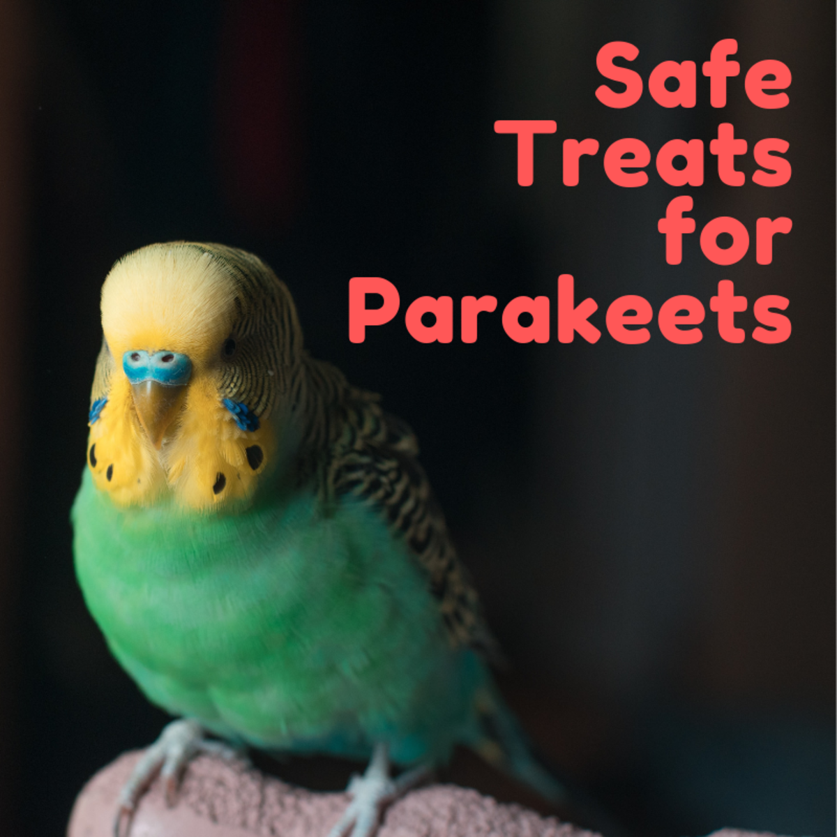 Add some variety to your budgie's diet with these healthy, safe-to-eat options.