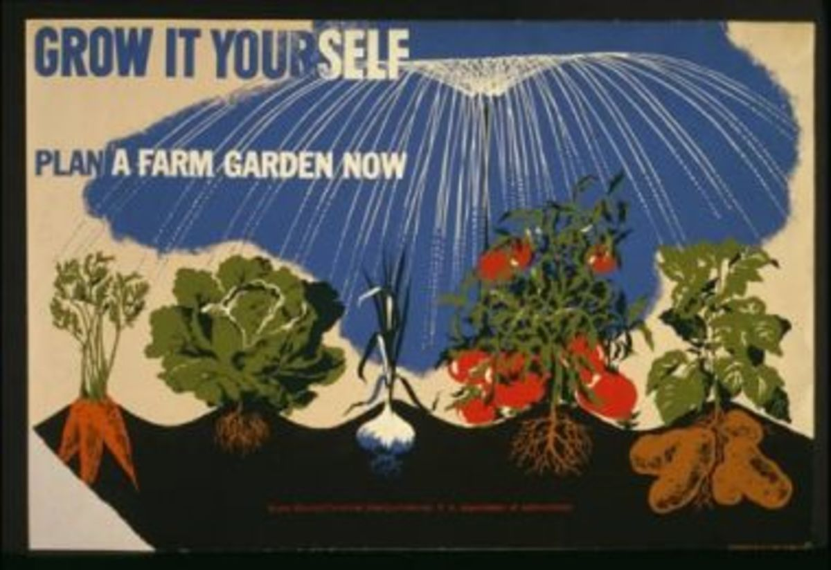 Victory gardens were an essential source of fresh fruits and vegetables during the Great Depression.