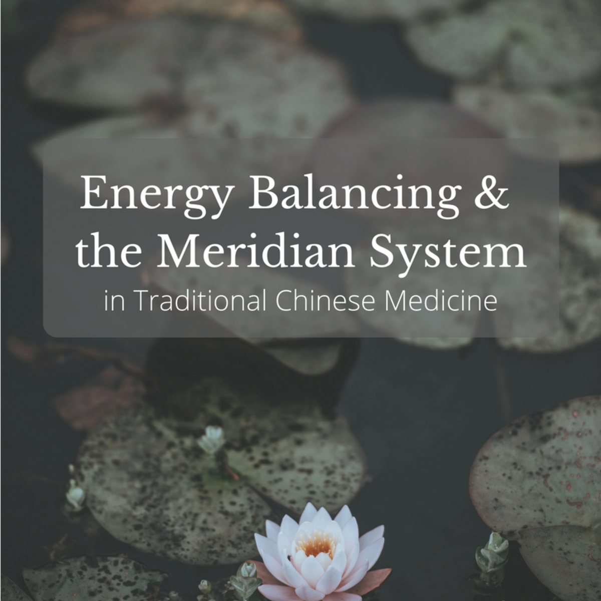 A Guide to the 12 Major Meridians of the Body
