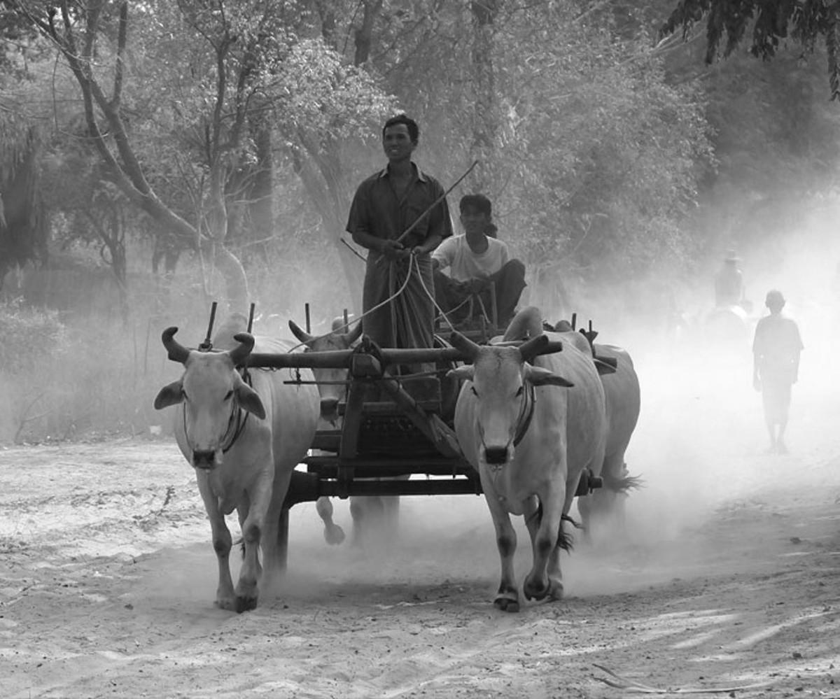 Bullock Cart:  A Poem