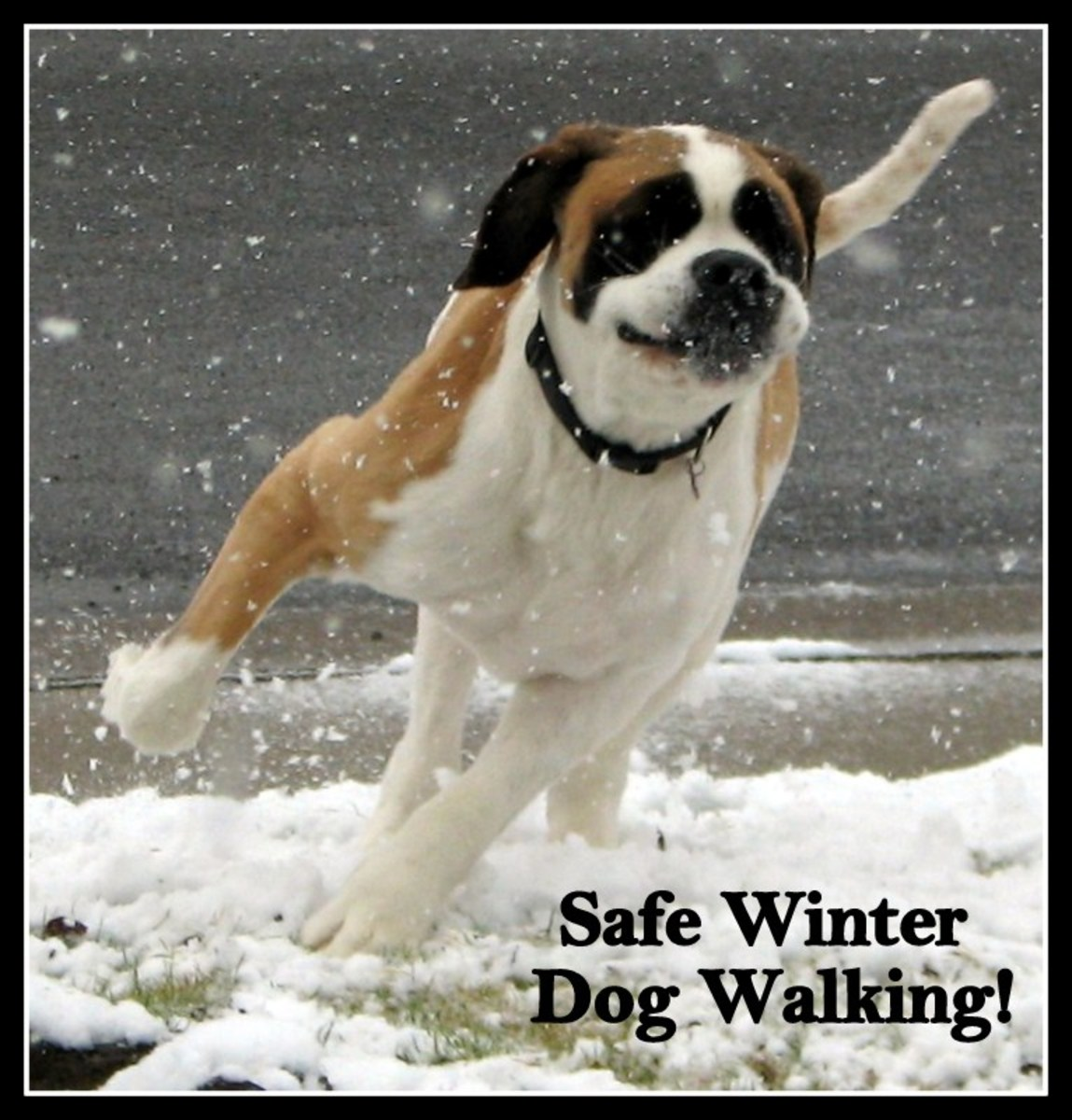 Winter Dog Walks:  Keep Safe and Healthy