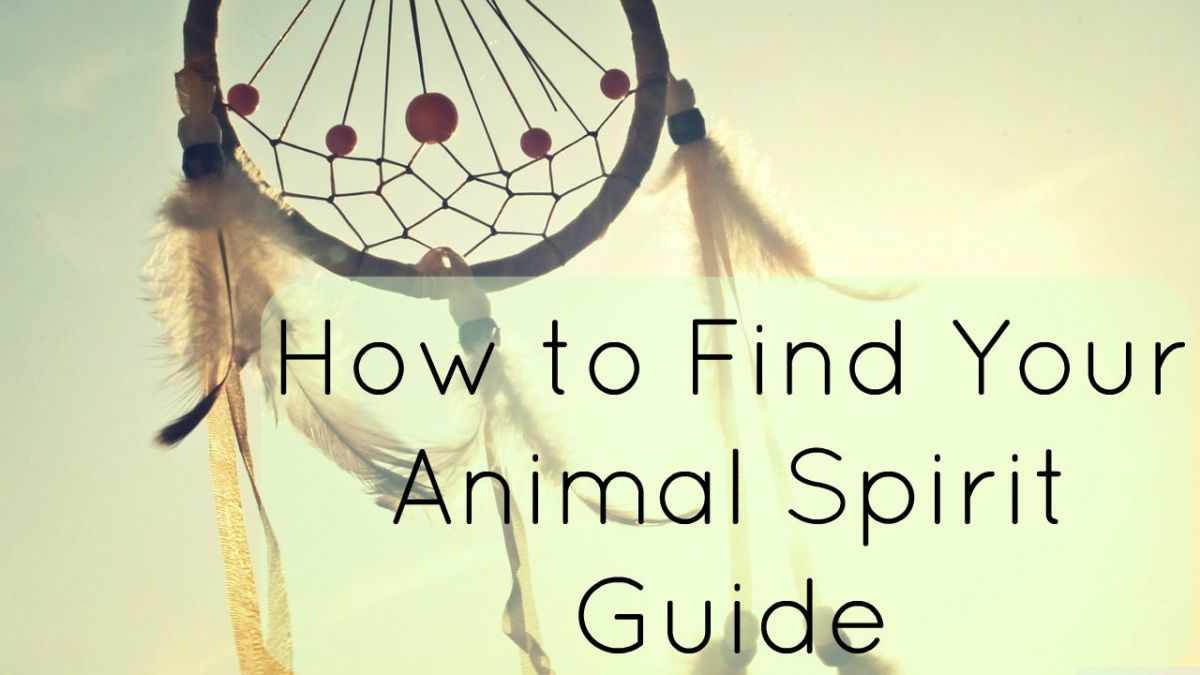 How To Find Your Animal Spirit Guide Exemplore
