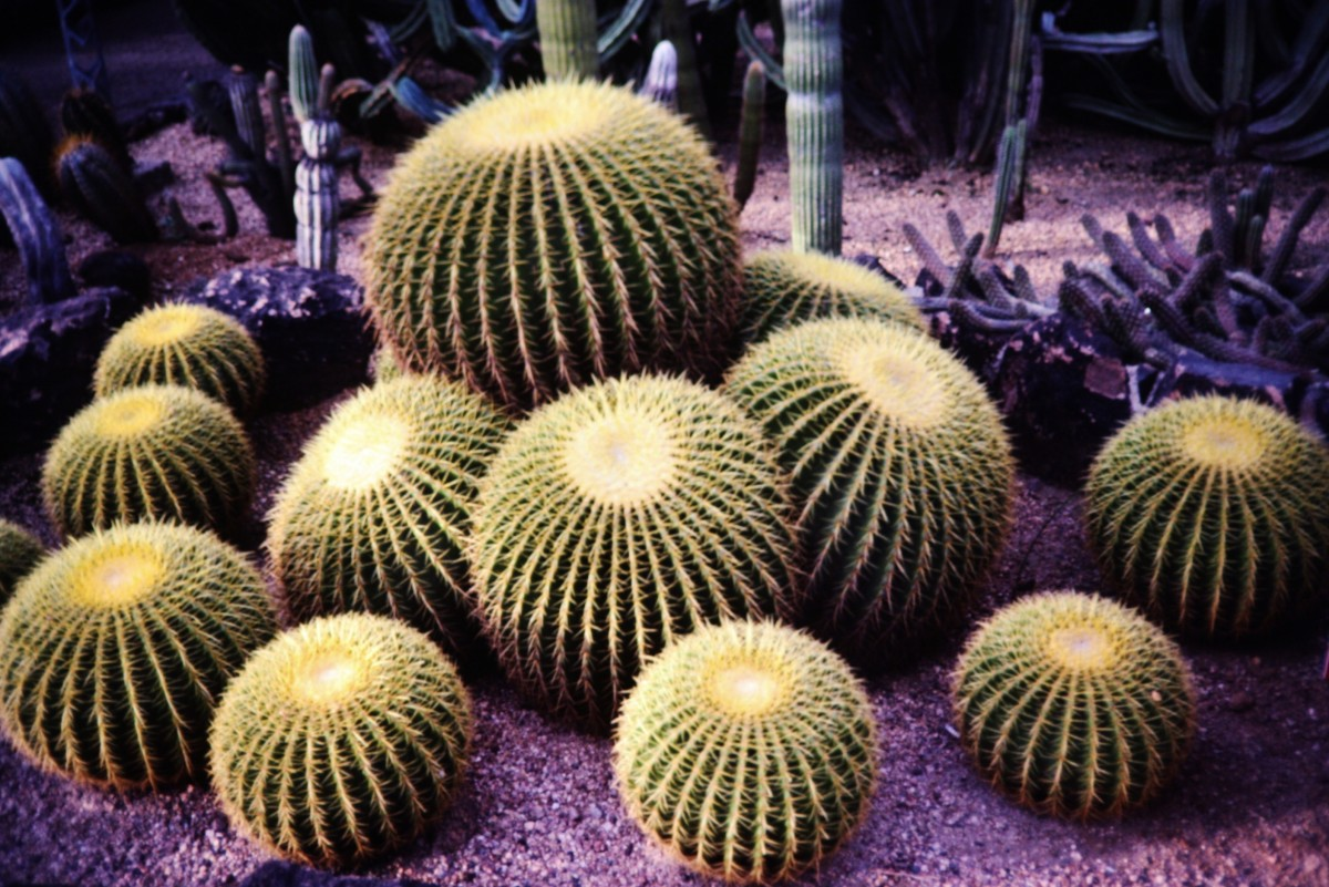 Visiting the Desert Botanical Garden in Phoenix, Arizona