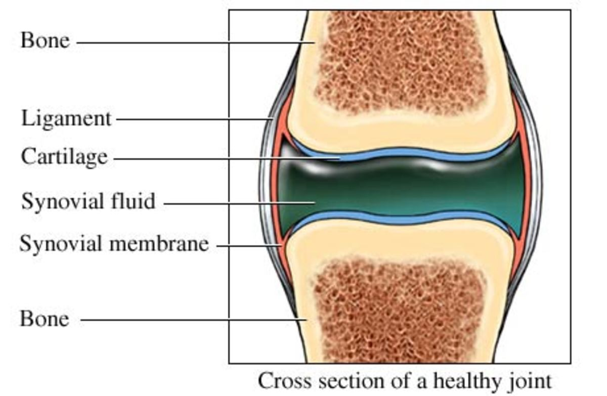 Different types of collagen are found in different types of tissue.
