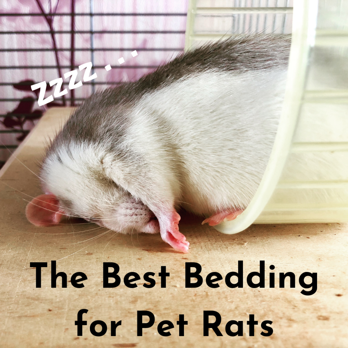 Discover which types of bedding to give your rat and which types to avoid at all costs.