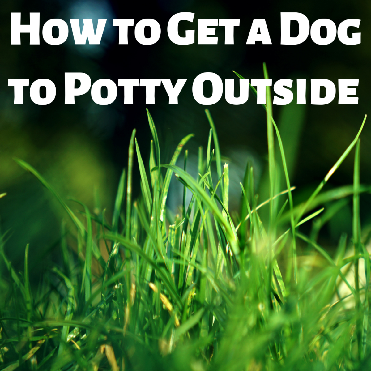 How to Get a Dog to Potty Outside