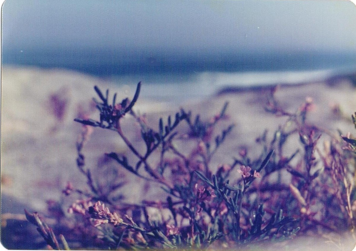 The Beach Blossoms