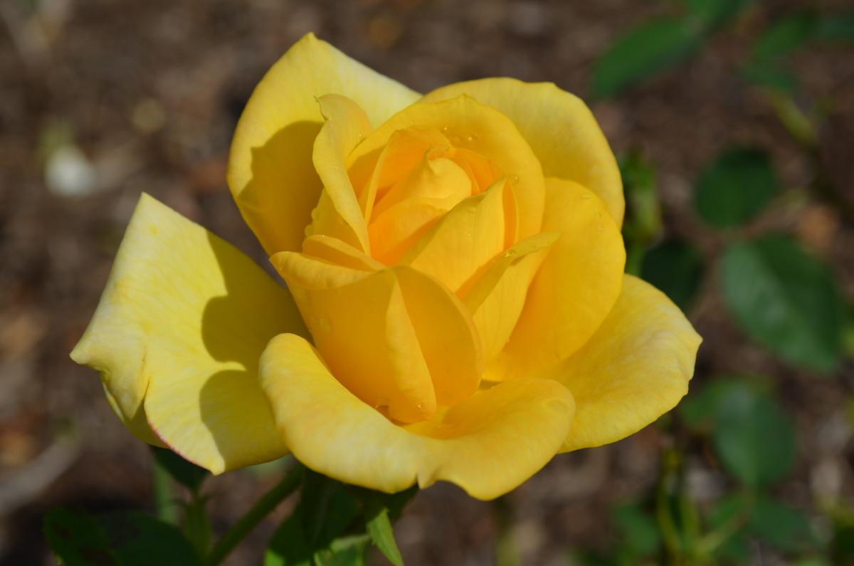 A Photo Gallery of Yellow Flowers