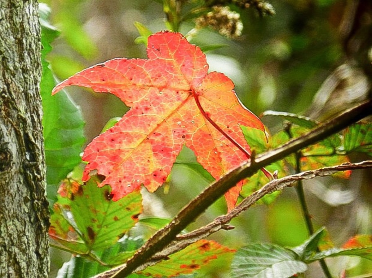 Autumn Leaves, Cycle of Life and Consciousness - Facts and a Poem