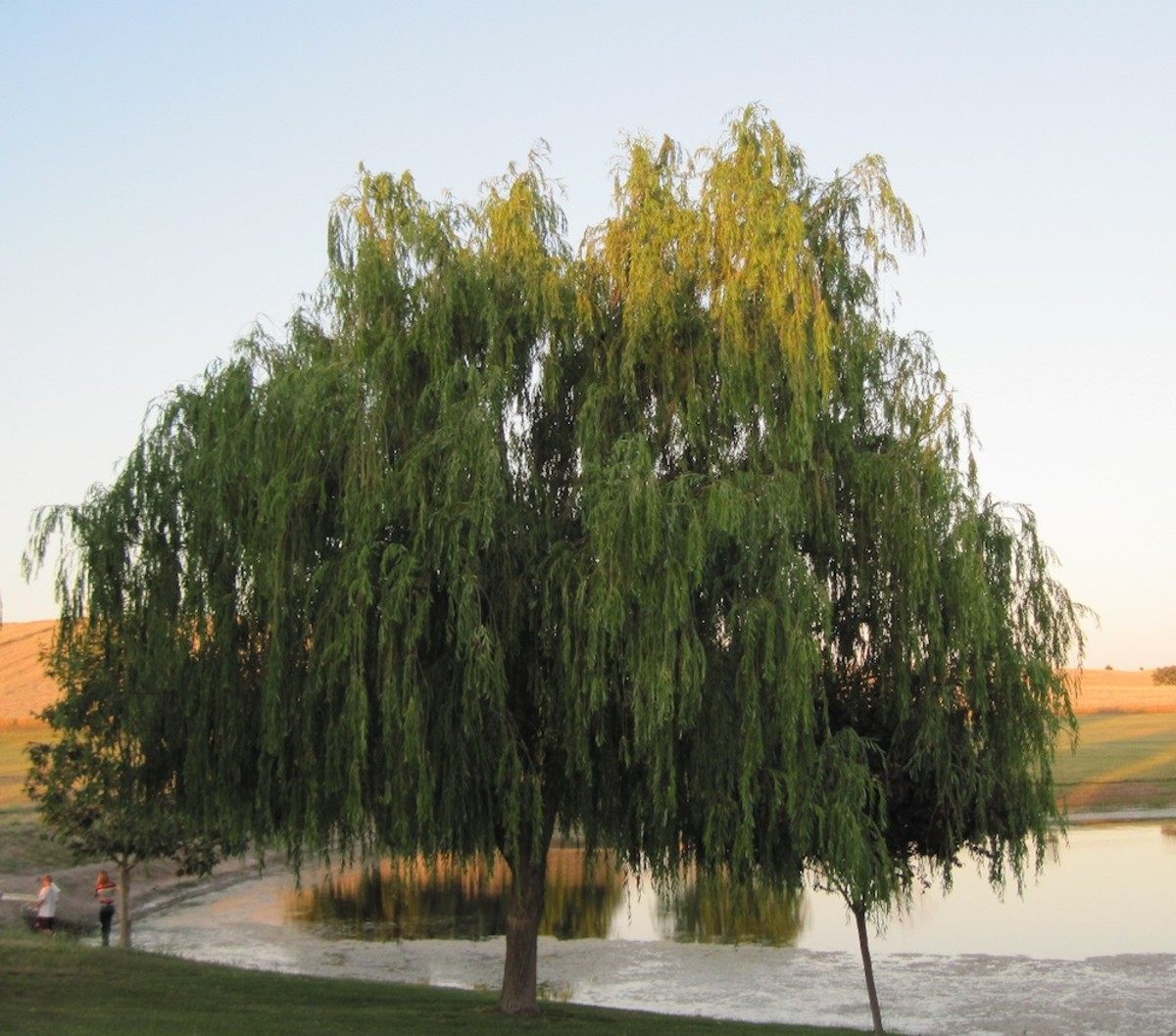 The willow weeps for the pain in the hearts of this man and woman.