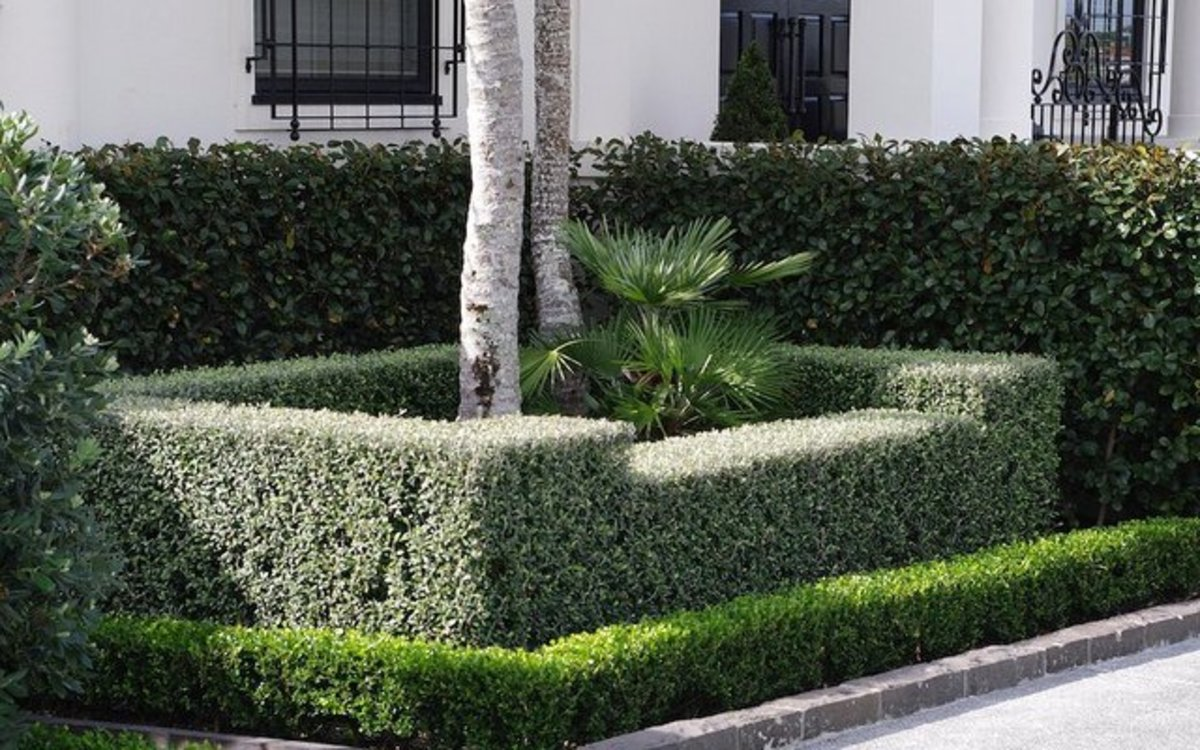 A modern formal hedge arrangement.