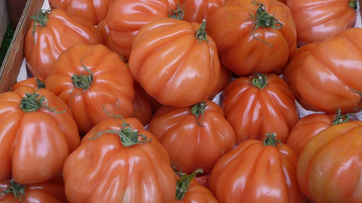 Delicious beefsteak tomatoes in all their wrinkled glory.