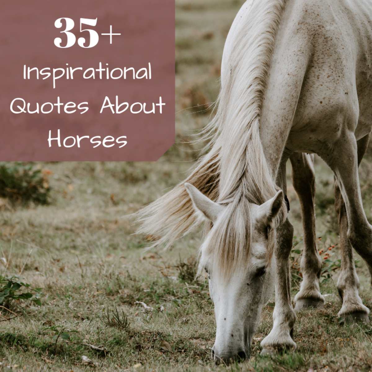 Inspirational Horse Quotes From Famous Historical Equestrians