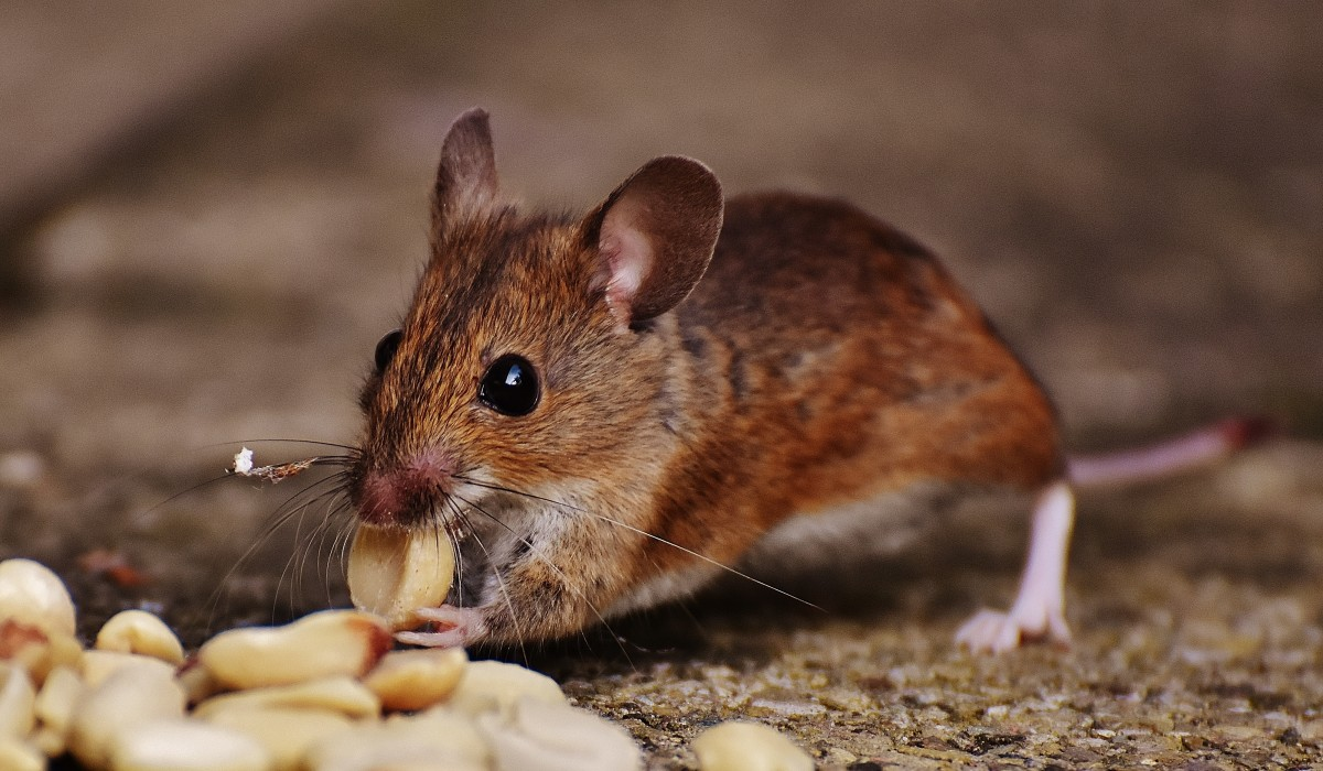 The Best Kid-Safe and Pet-Friendly Mousetraps