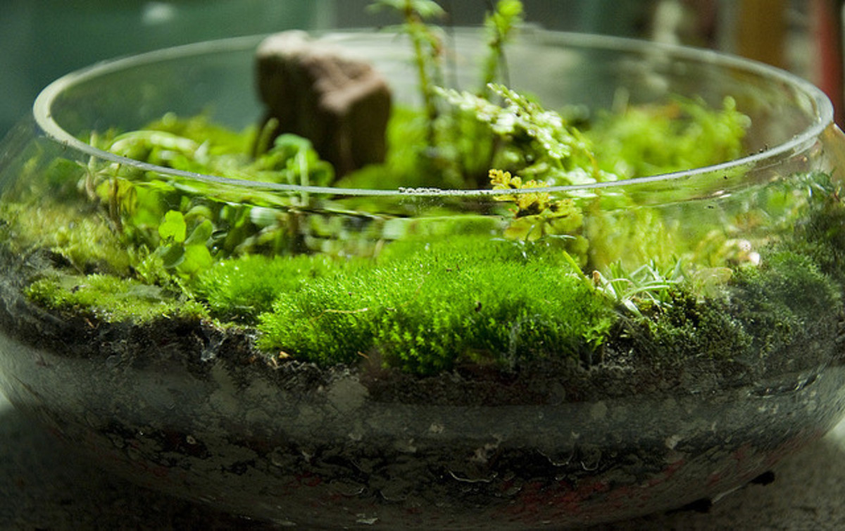 All about moss!