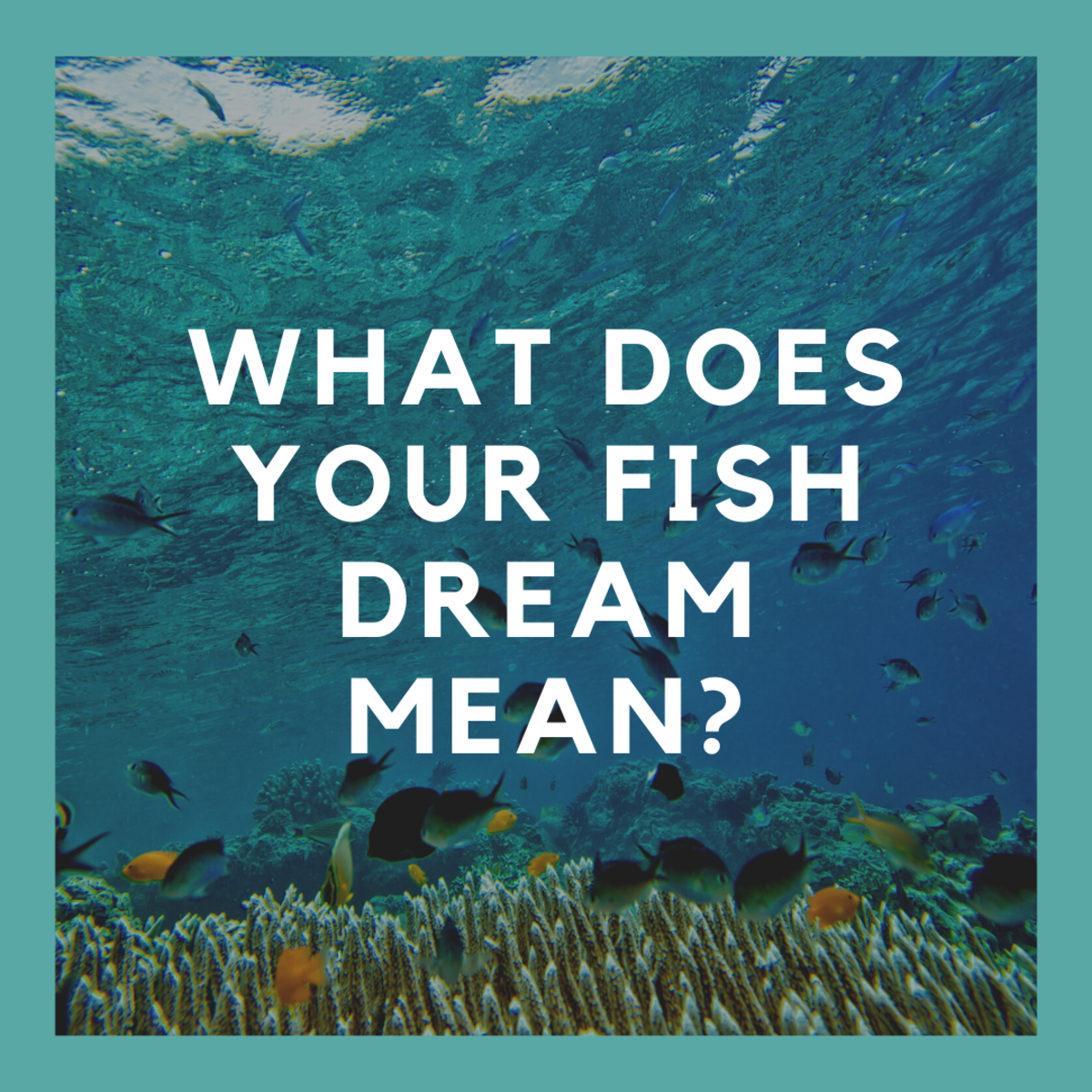 Dreaming of fish? Find out why!