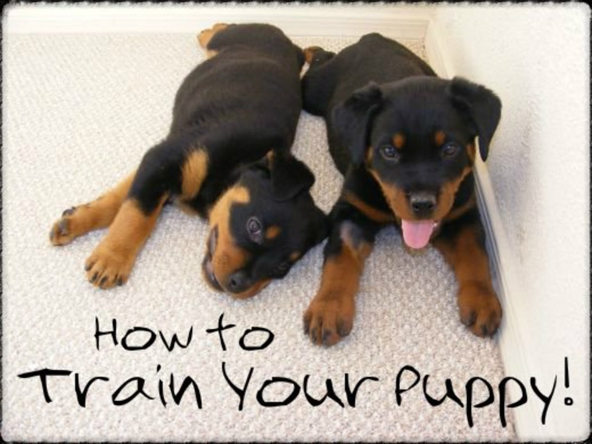 Puppy potty training secrets revealed!