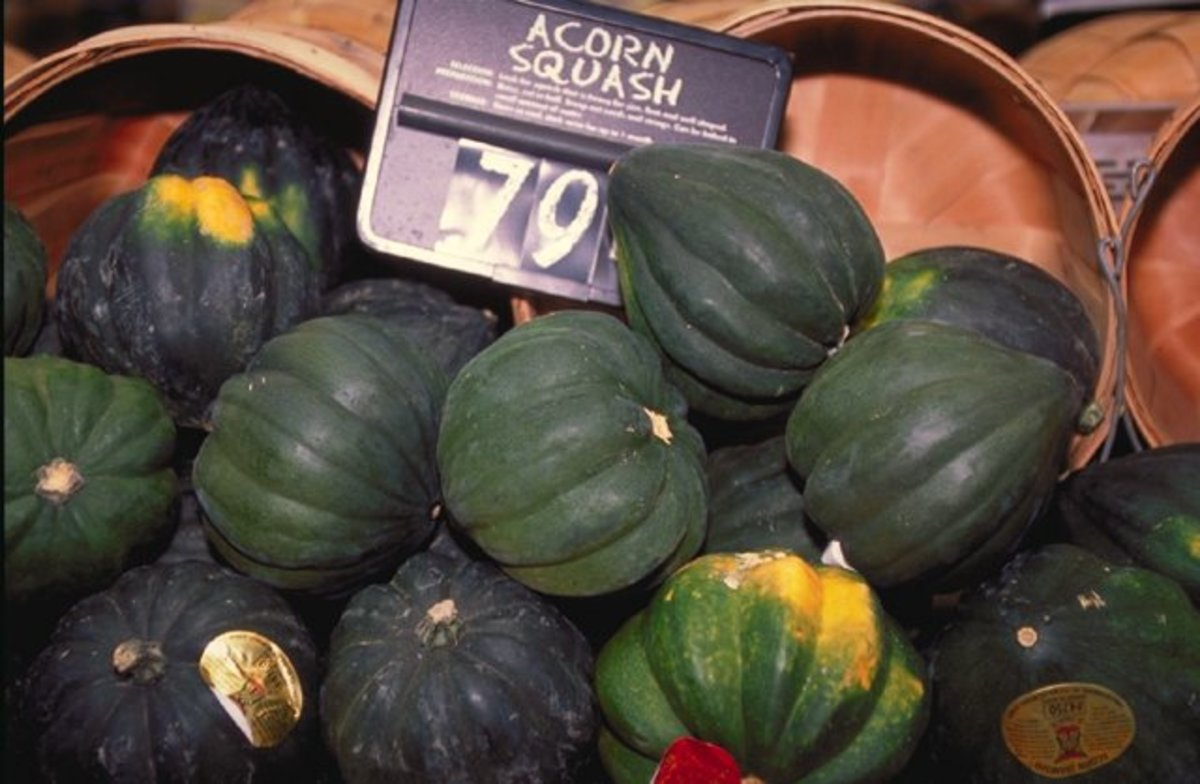 I could only find Green Acorn Squash to photograph!